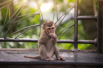 baby monkey sitting on concrete chair and eating food
