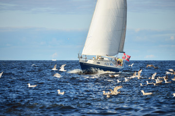 The yacht sails in the open sea with a lot of gulls around on a clear spring day, Latvia