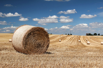 That's the end of the summer ... / Harvested wheat field