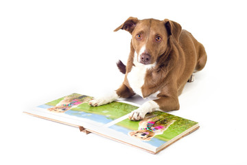 dog reading a book lying on white background