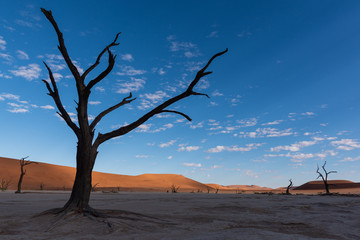 Dark tree silhouette on desert pan with blue sky, clouds and red sand dunes, Deadnvlei, Namibia