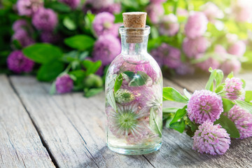 Clover tincture or infusion and clover flowers bunch.