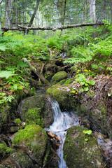 Mountain stream in the Woods. Khabarovsk region near the city of Komsomolsk-on-Amur.