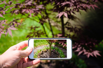 The man is holding a phone in hand, taking a picture of a tree in the garden. Work in the garden, photos of the effects.