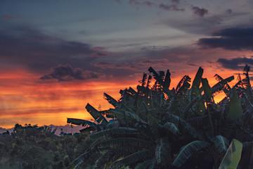 Sunset over Banana Trees
