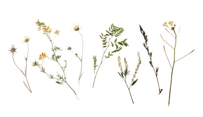 Dried meadow flowers on white background, top view