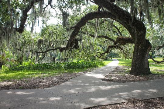 Shady Oak in Park