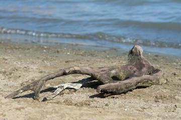 Snag lying near waving water