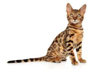 Surprised Bengal kitten