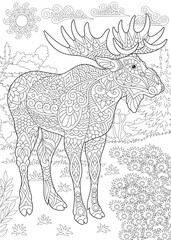 Coloring Page. Coloring Book. Colouring picture with moose.