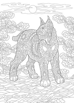 Coloring Page. Coloring Book. Colouring picture with wildcat.