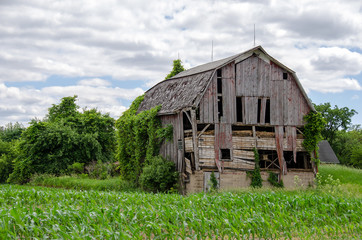 dilapidated old barn in Michigan corn field