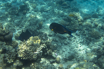 Fish on a coral reef in the Red Sea