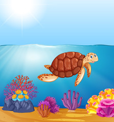 Green sea turtle in ocean