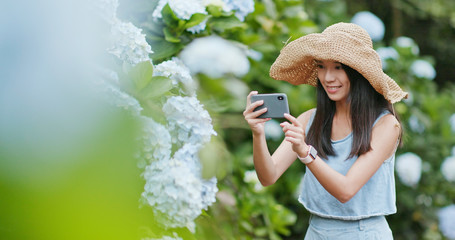 Young Woman taking photo on Hydrangea flower garden