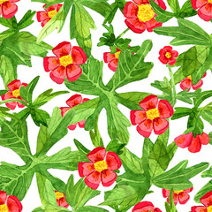 Seamless pattern with red anemone flowers and green leaves on white. Watercolor illustration with summer season background, botanical drawings for print, fabric, textile