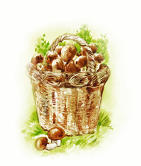 Basket with mushrooms. Watercolor painting in vintage style
