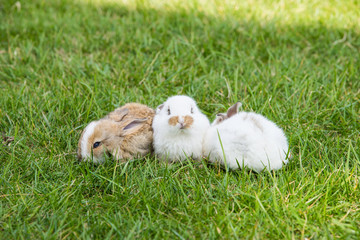 Cute little rabbits in grass