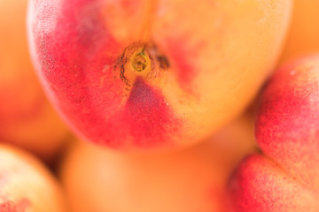 Close up of ripe apricot