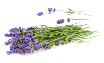 Lavender bunch on a white