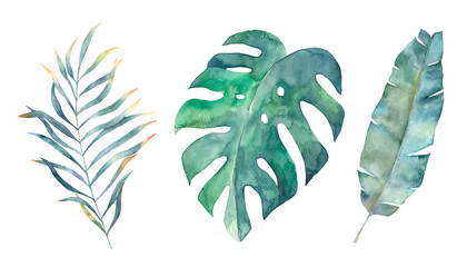 Watercolor tropical leaves set. Hand drawn illustration. Isolated image