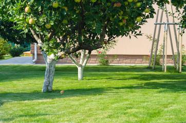 green lawn backyard garden appletree