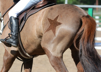 Equestrian sport in details. Back of the red sports horse with with a beautiful