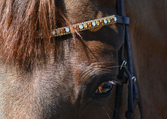 Head of a red horse with a beautiful bridle.
