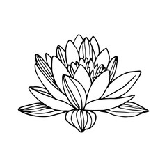 Lotus linear vector drawing, tattoo sketch.