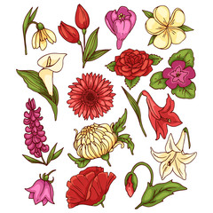 Different colored flowers vector set.