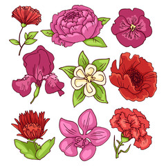 Peony, rose, carnation, orchid, violet, poppy, iris - a set of color vector drawings.
