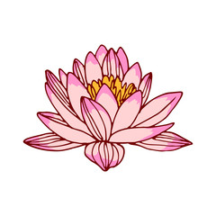 Pink lotus colored vector illustration.