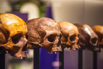 Selective focus, row of skulls without mandible