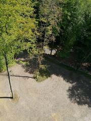 Vogelperspektive Bäume im Park