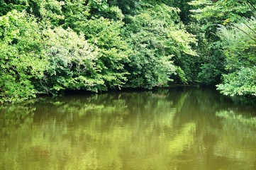 Teich,wasser, see, baum, natur, landschaft, fluss, wald, green, teich, karpfen, sommer, park, blau, gras, frühling, schön, ecology, pflanze, gelassenheit, day, leise, schönheit,