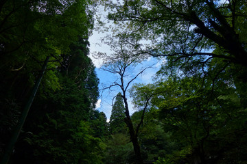 森の中 青空 暗い風景 In the forest Blue sky Dark landscape
