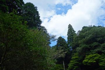 森 青空 自然 Forest blue sky natural