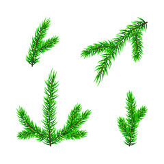 Set of Christmas tree branch isolated on white. Vector illustration Pine tree / fir branch. Could be used for Christmas, New year and winter decorations.