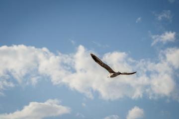 Birds over the city