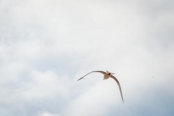 Bird flying ocer the city