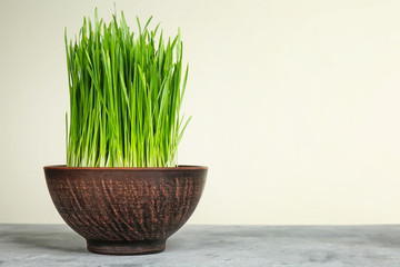 Bowl with sprouted wheat grass on table against white background