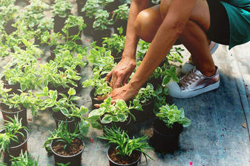 Close up of woman hands planting flowers in pot