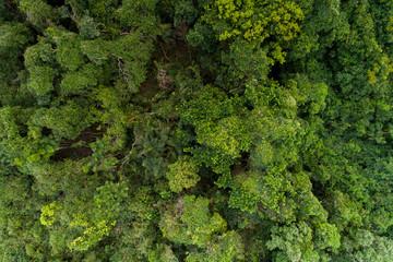 Green forest  at Buzios - Rio de Janeiro