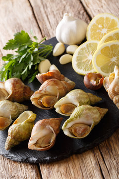 French cuisine: raw marine snails, whelk close-up and ingredients on a slate board. vertical