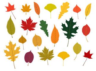 秋の紅葉イラストset