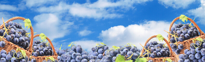 Grapes against the blue sky