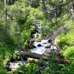 Mountain stream with clear water. A small river with pure tasty icy water in the forest.