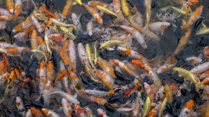 A wide variety of fish in the pool