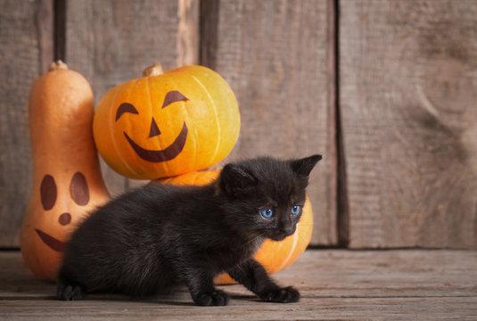 black little cat with halloween pumpkins