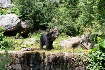 Zoo Zurich, Switzerland